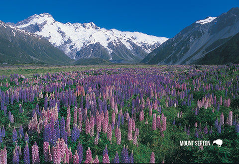 SMC341 - Mt Sefton And Lupins - Small Postcard - Postcards NZ Ltd