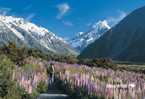 SMC343 - Mt Cook & Lupins - Small Postcard - Postcards NZ Ltd