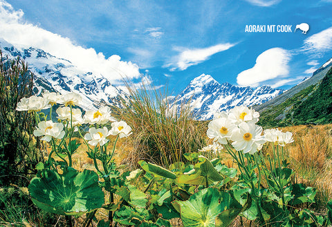 SMC348 - Mount Cook Buttercup - Small Postcard - Postcards NZ Ltd