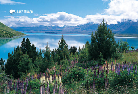 SMC358 - Lake Tekapo - Small Postcard