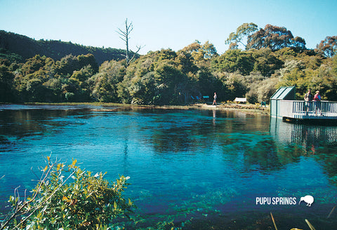 SNE742 - Pupu Springs - Small Postcard - Postcards NZ Ltd