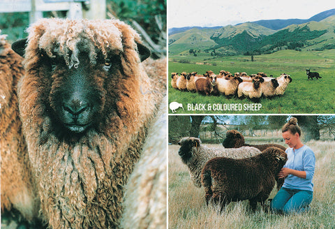 SRO224 - Coloured Sheep - Small Postcard - Postcards NZ Ltd