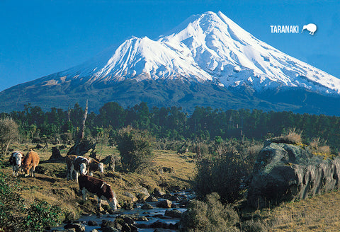 STA922 - Mt Taranaki & Cattle - Small Postcard - Postcards NZ Ltd