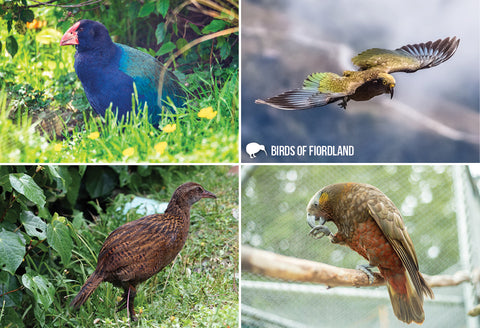 SGI1112 - Birds of Fiordland - Small Postcard - Postcards NZ Ltd