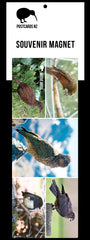 PGI131 - Native Birds - Panoramic Magnet - Postcards NZ Ltd