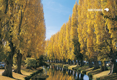 SCA281 - Autumn Avon River, Christchurch  - Small Postcard - Postcards NZ Ltd