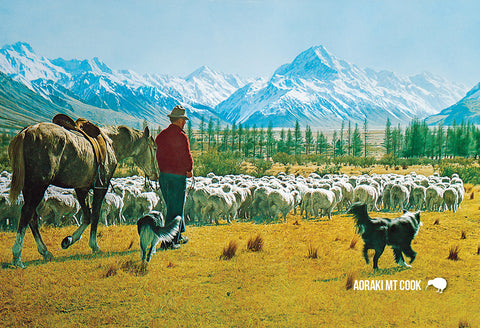 SMC367 - Mustering, Glentanner Station, Mt Cook - Small Pos - Postcards NZ Ltd
