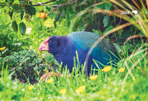 SFI37 - Nz Takahe, Te Anau - Small Postcard - Postcards NZ Ltd