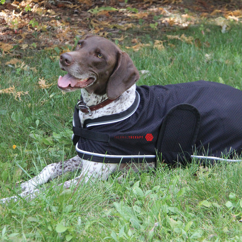 Thermal Therapy Mesh Dog Coat
