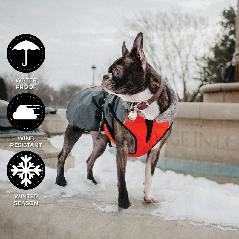 Chinook Dog Coat
