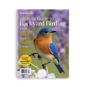 Ultimate Guide to Backyard Birding
