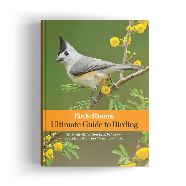 Ultimate Guide to Birding