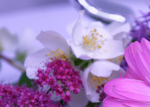 Everything You Need to Know About Jasmine Perfume