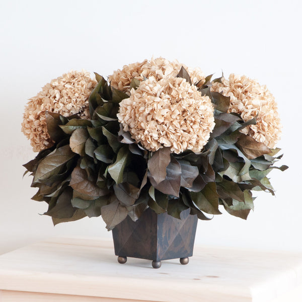 Dried Hydrangea in Cream