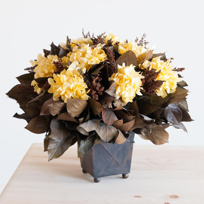Dried Hydrangea in Yellow