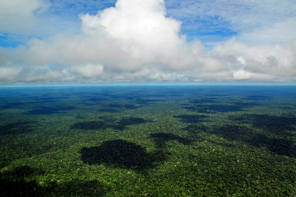 Aerial view of the Brazilian Amazon Rainforest