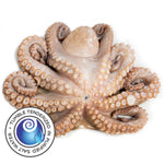 Tenderized Wild Octopus 6-8 lbs (T2)
