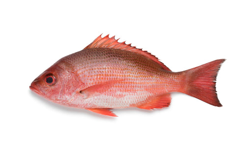 Red Snapper 1-2 lbs
