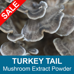 Turkey Tail Mushroom Extract - Bulk Powder (Trametes versicolor)