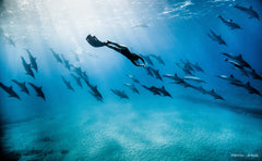 Iho Carbon Fiber Freediving Blades