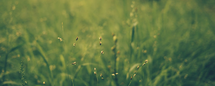 files/banner-no_copy-grass-short.jpg