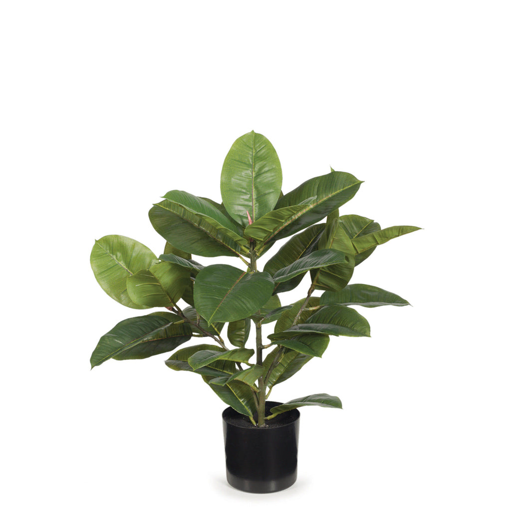 Rubber Plant / Small