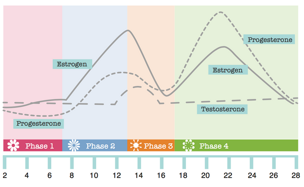 What your hormones & skin are doing at each phase of your cycle