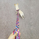 Stylish No-Pull Pet dog Harness and Leash