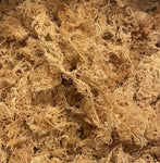 Raw Sea Moss (Chondrus Crispus) From St. Lucia