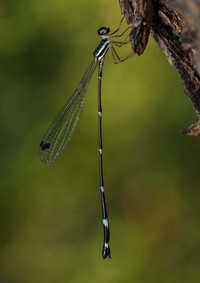A Beautiful Damsel
