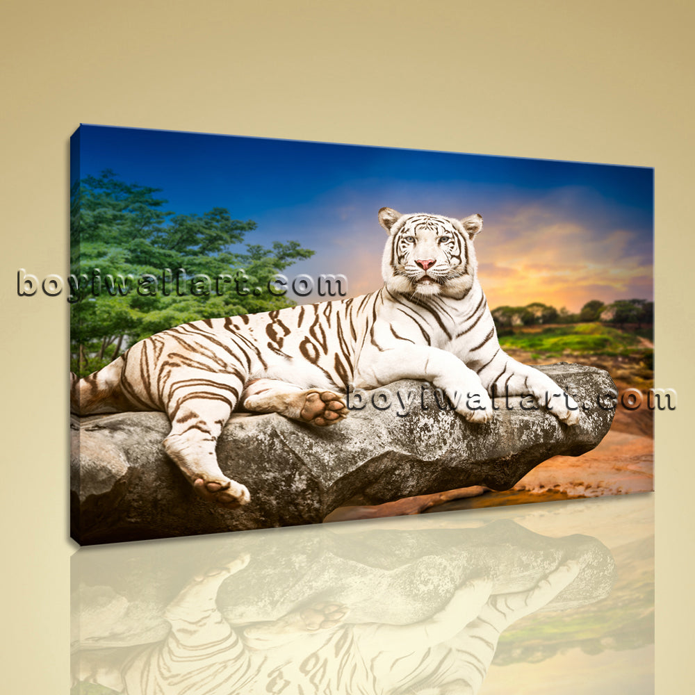 Large White Tiger Wall Art Decor Photography Home Bedroom 1 Panel ...
