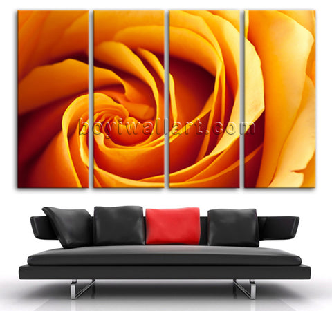 Rose Flower hd print