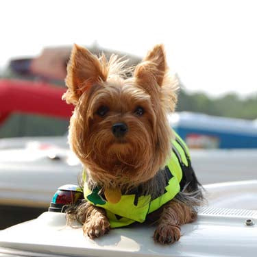 Dog Life Jacket - Safety Neon Yellow by Paws Aboard