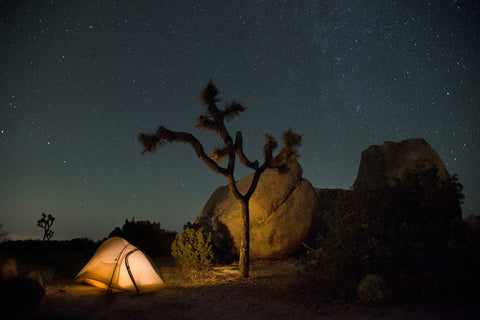 Image of a glowing tent underneath a Joshua tree and a starry night sky