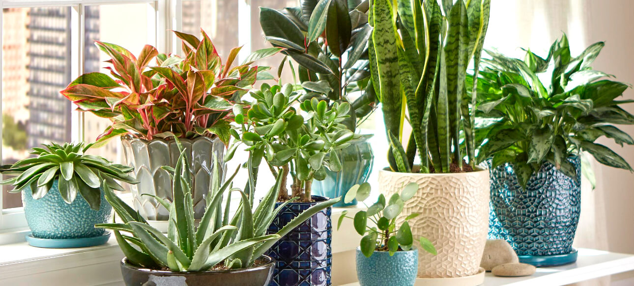 The 9 Best Houseplants To Beautify Your Home