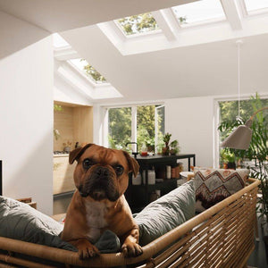 Dog enjoying the light from 4 velux skylights
