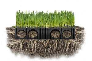 Diagram of Grass growing through turf cell
