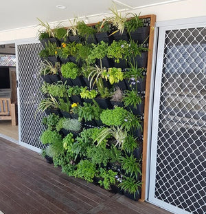 Green wall screen with clip on pots and timber frame