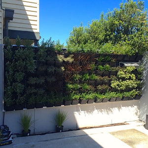 Green wall pots being used for a DIY outside green wall