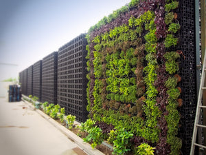 Gro wall pro being used to create stunning green walls outside for residential