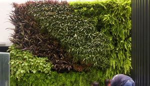 Vertical garden kits can be used for balcony or veranda gardens