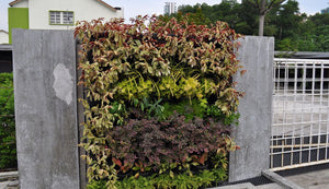 Cement pavers used to build around the vertical garden