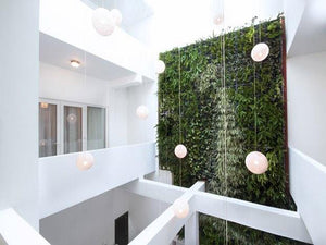 A luxury 5 star vertical garden used by our Gold Coast based landscapers to create this stunning indoor vertical garden.