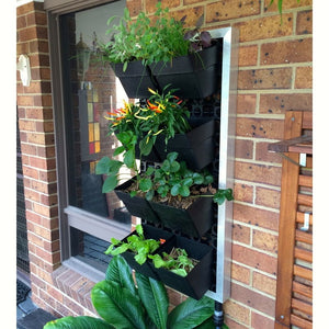 Green wall and vertical garden finished DIY project