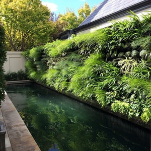 Bali influenced vertical garden. Vertical garden next to the pool to bring the sense of bali to the owners backyard pool area