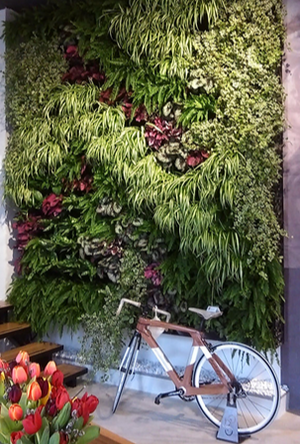the after images of a vertical garden 3-4 months post built