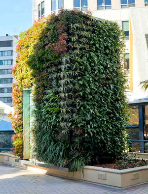 Commercial Vertical Garden using the Gro wall slim line in Sydney