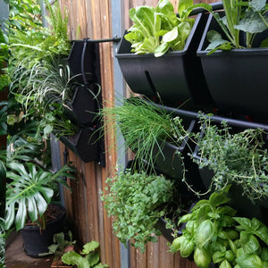 An up close image of the gro wall slim line a customer installed herself as a vertical garden here on the Gold Coast