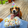 Dog happy on birthday