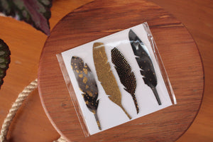 Feather Magnets